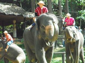 Elephant_show Thai fitness camp
