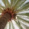 Photo of coconut tree